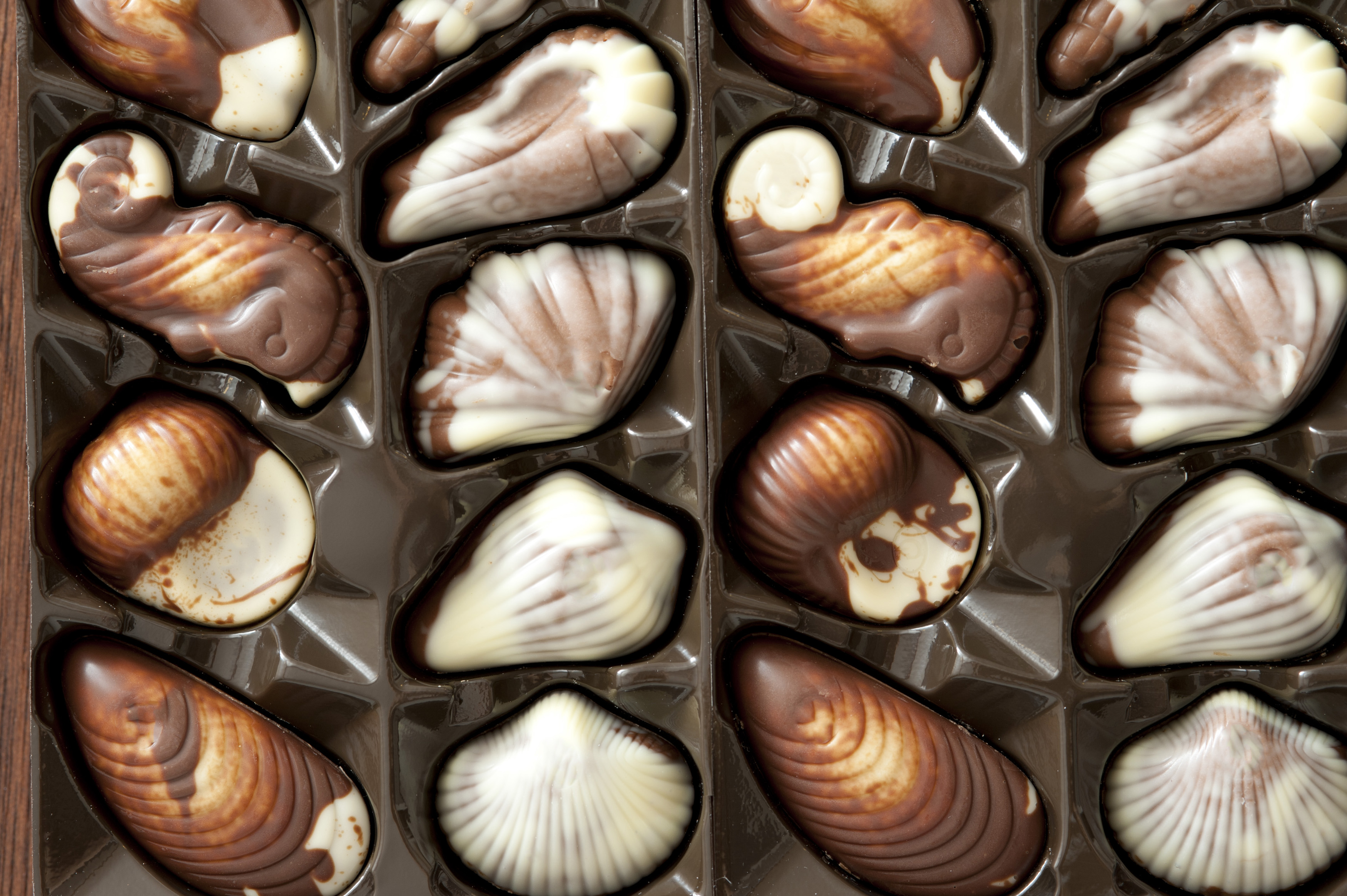 Box of packaged shell-shaped chocolate candy in white and milky chocolate as a gift for a loved one or celebration, close up overhead view