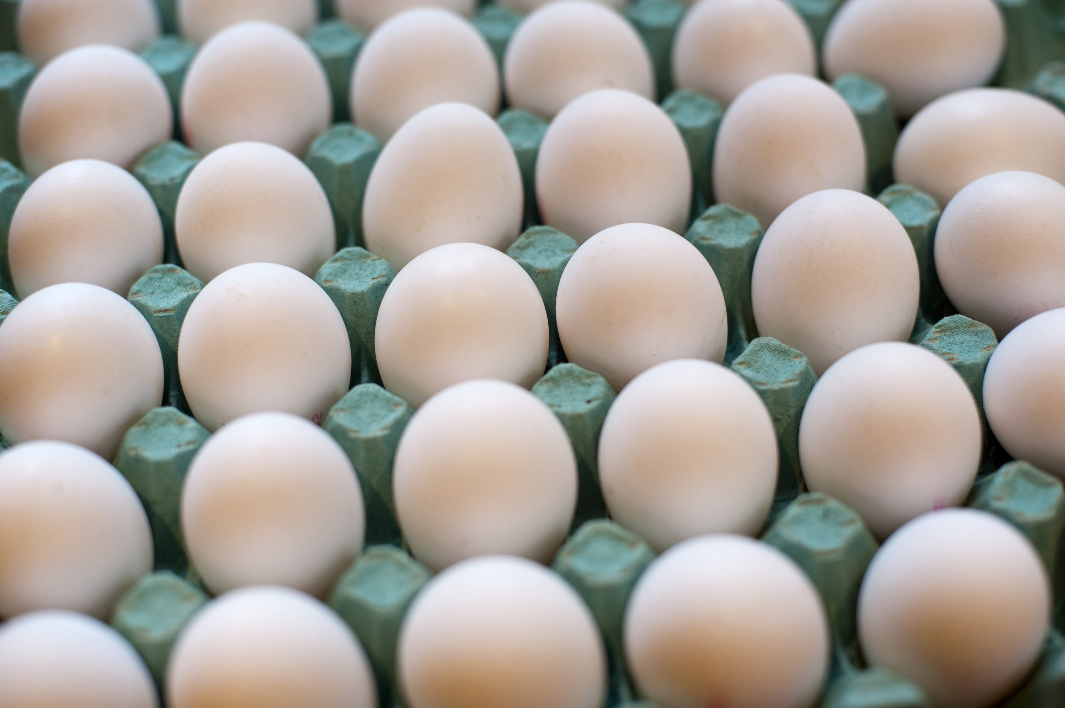 Cardboard carton of fresh whole white farm eggs, a nutirtious food and cooking ingredient , close up high angle view