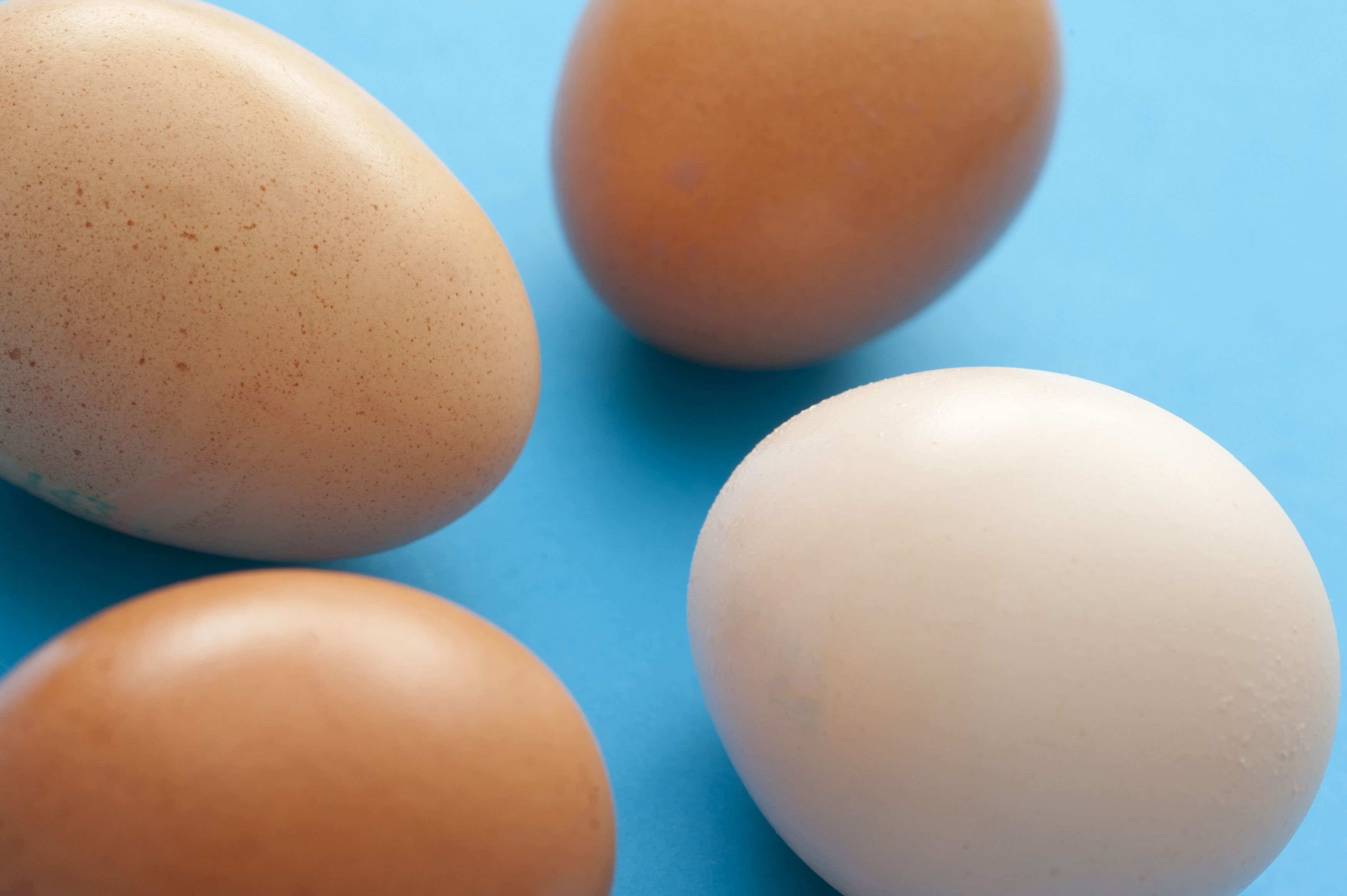 Four healthy raw brown and white eggs on a blue background for use as an ingredient in cooking and baking or for a delicious breakfast