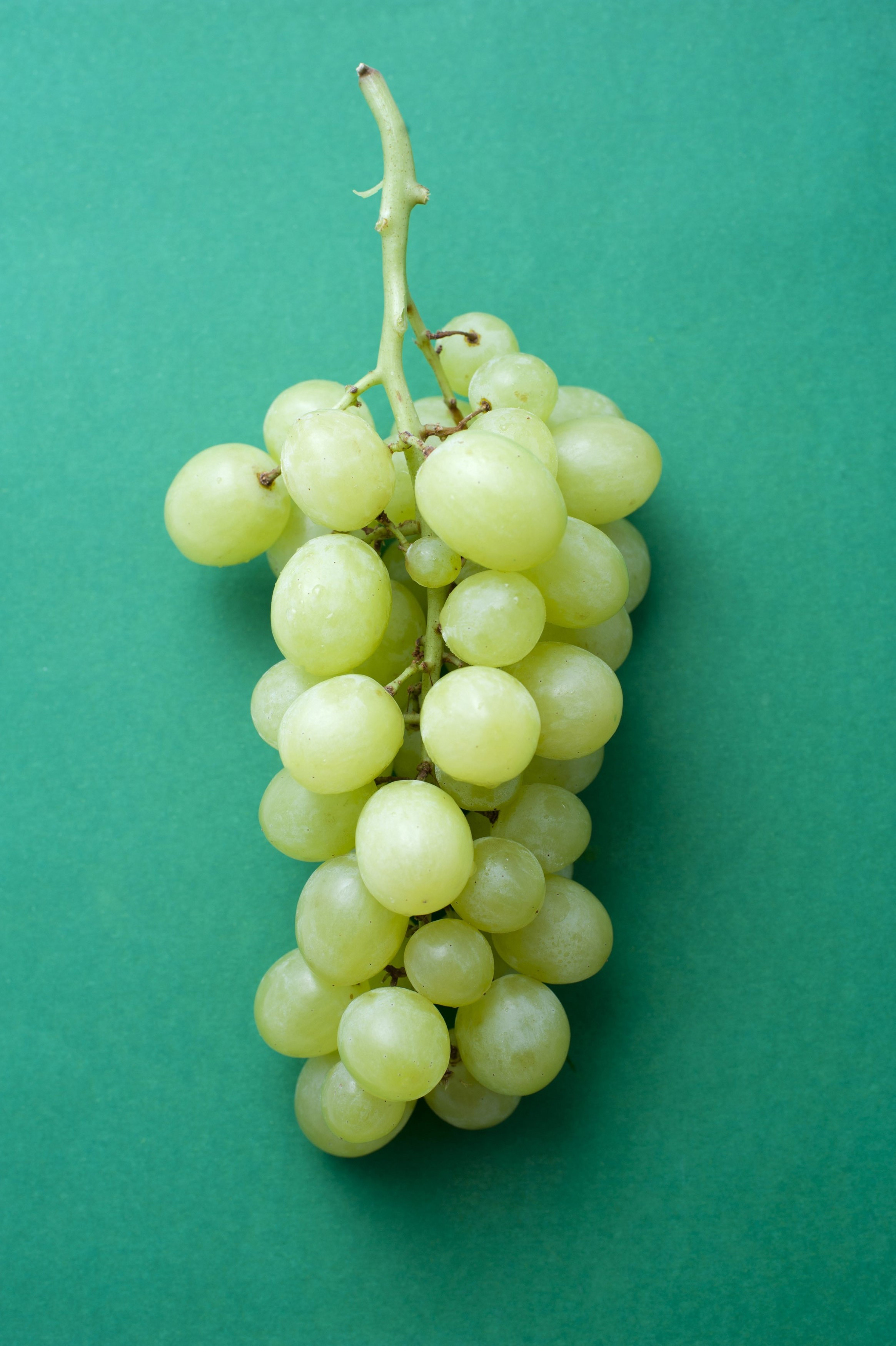 Fresh tasty green grapes (muscat variety), close-up on green background