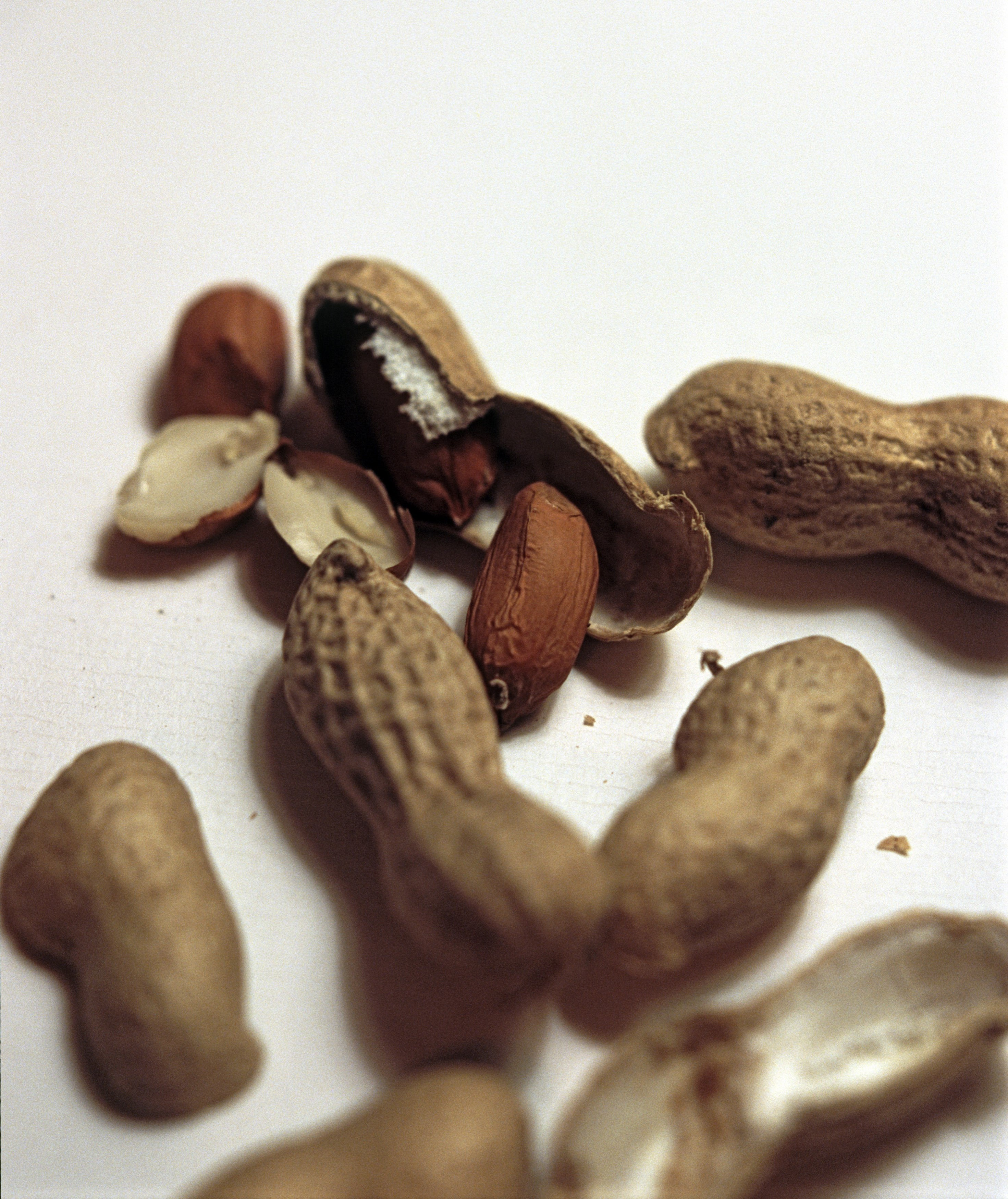 Fresh peanuts, groundnuts or monkey nuts with their shells or pods which ripen underground