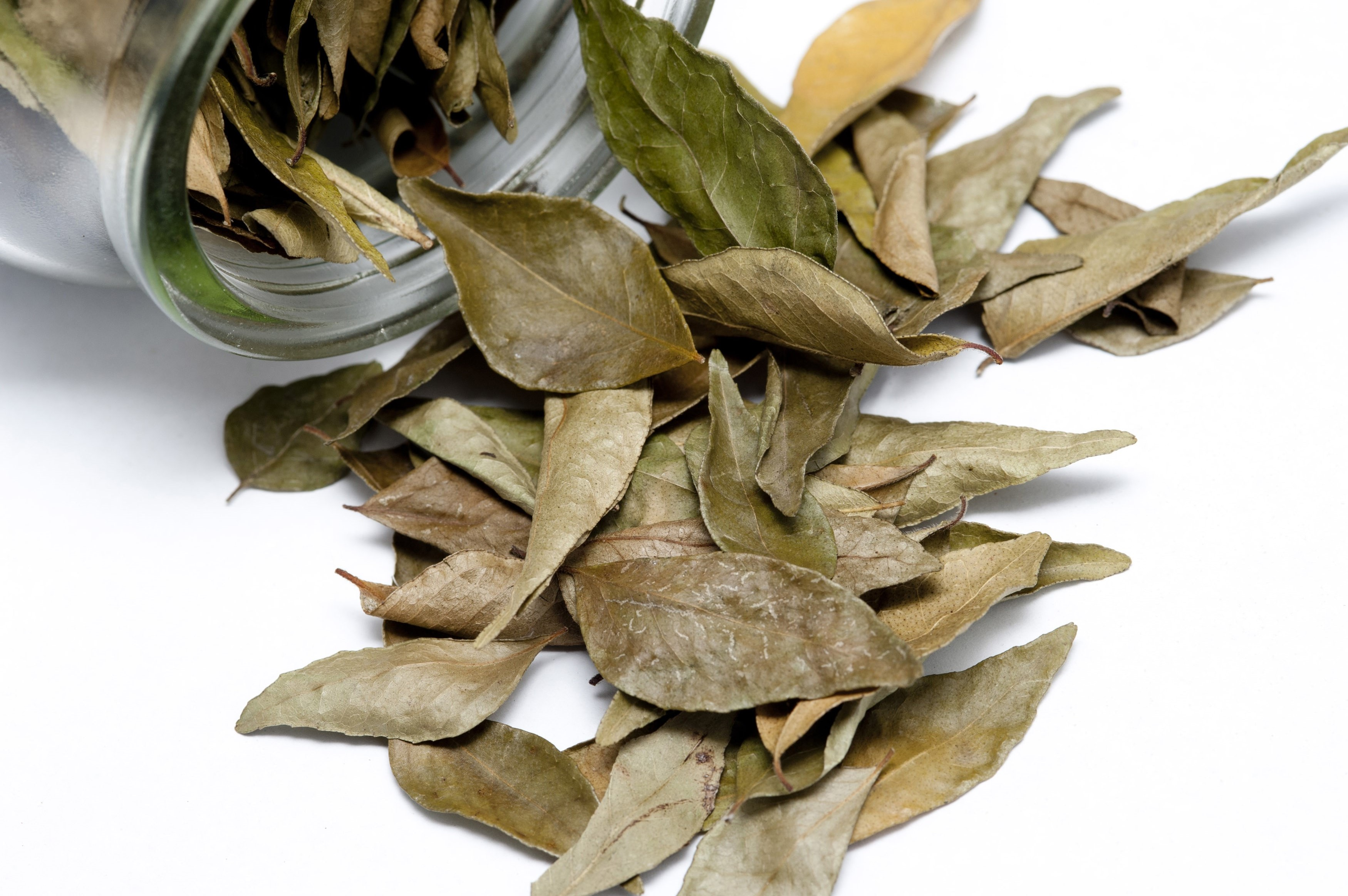 Dried bay leaves, a pungent seasoning in cookery with medicinal properties, spilling out of a glass container