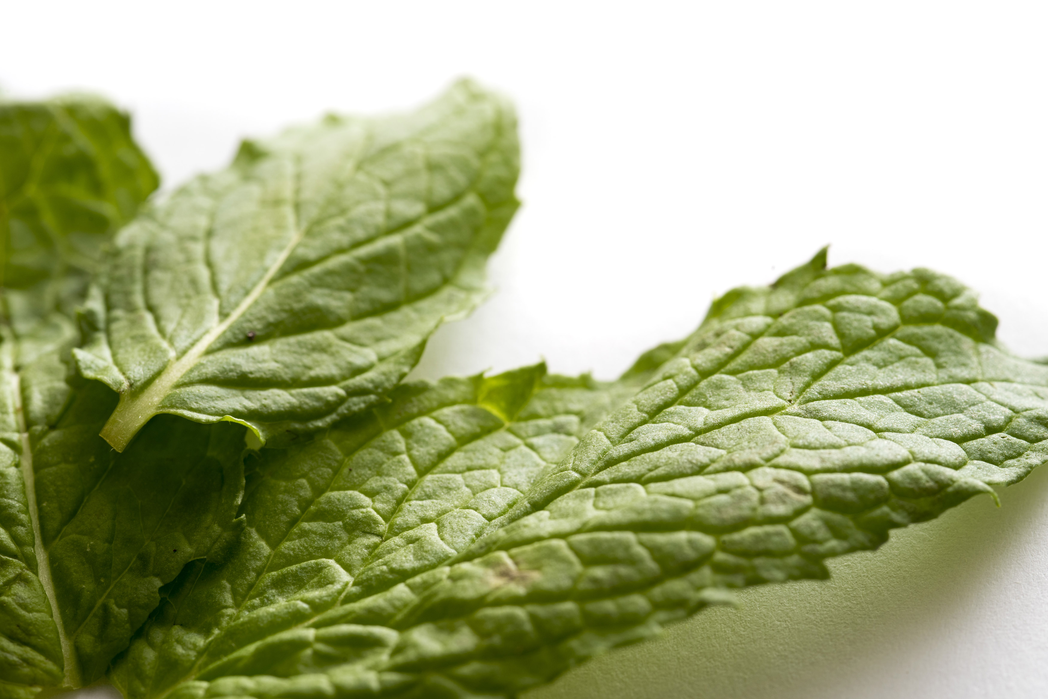 Using Mint is Best in Loosing Weight - LikesnTrends.com