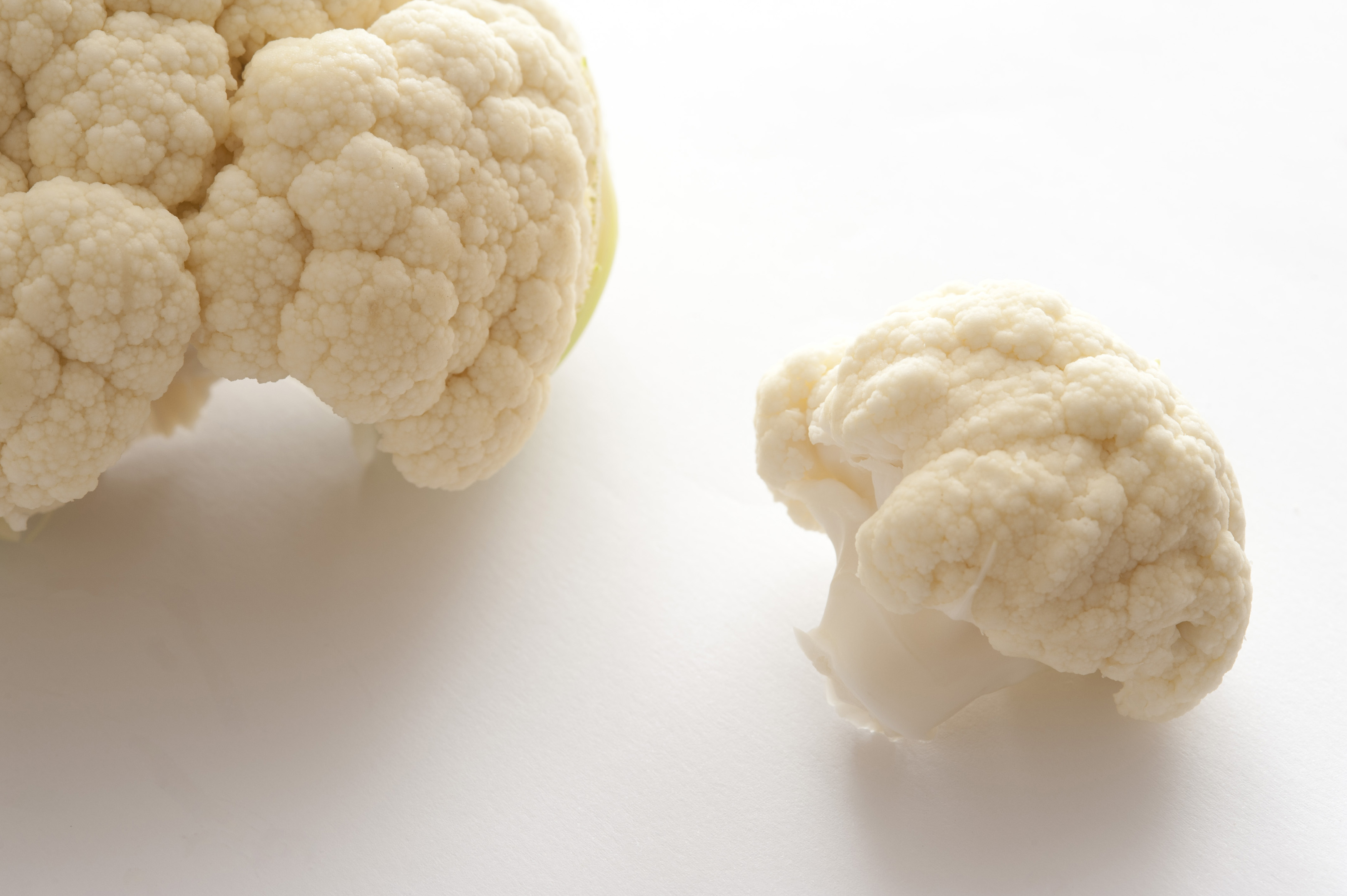 Fresh white cauliflower in a close up view of the flower head and a small loose floret ready to prepare for dinner, over white with copyspace