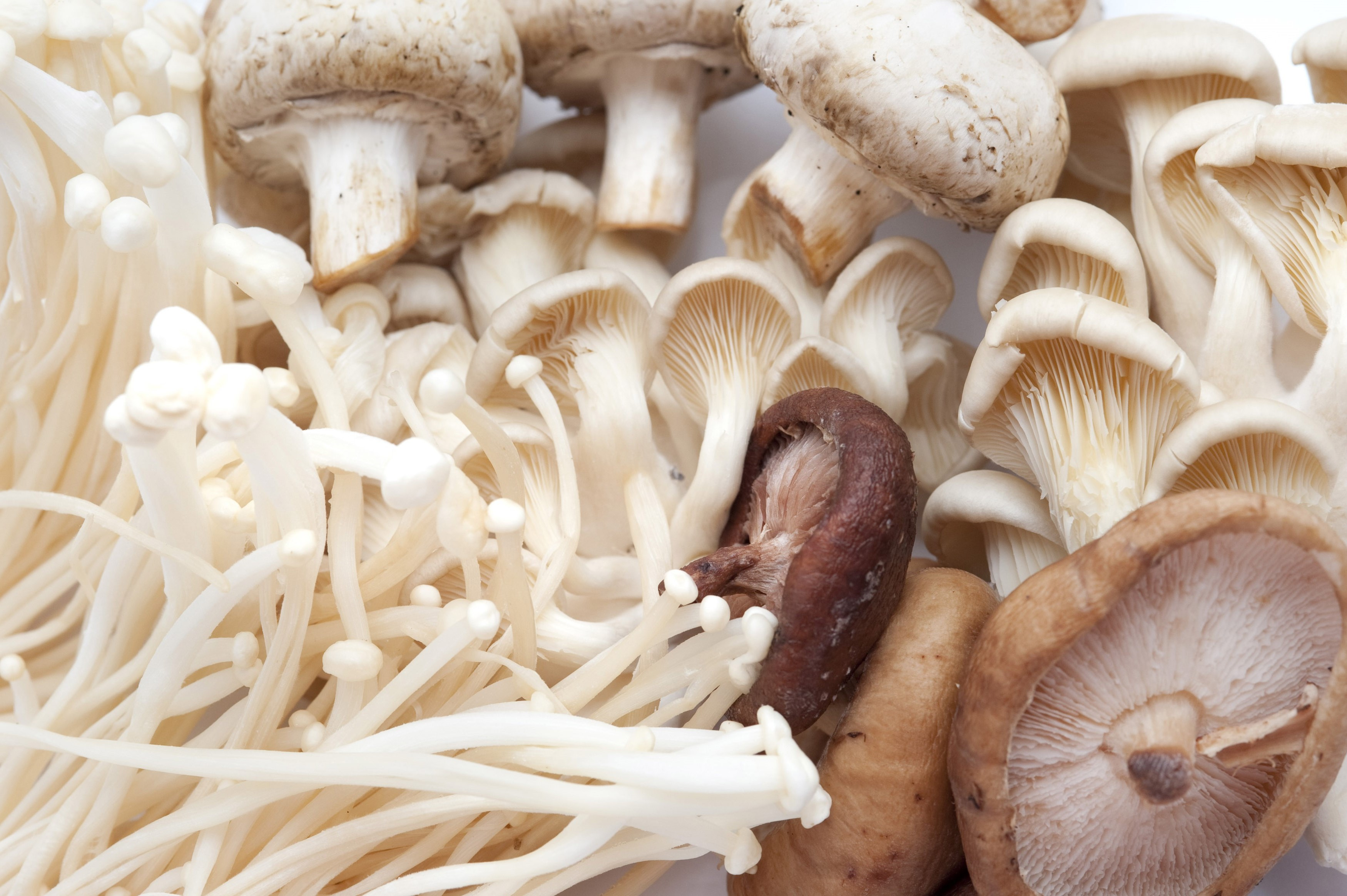 Assorted fresh edible mushrooms with enoki, shiitake, hiratake, oyster and agarics for use as a savoury flavouring in gourmet cuisine