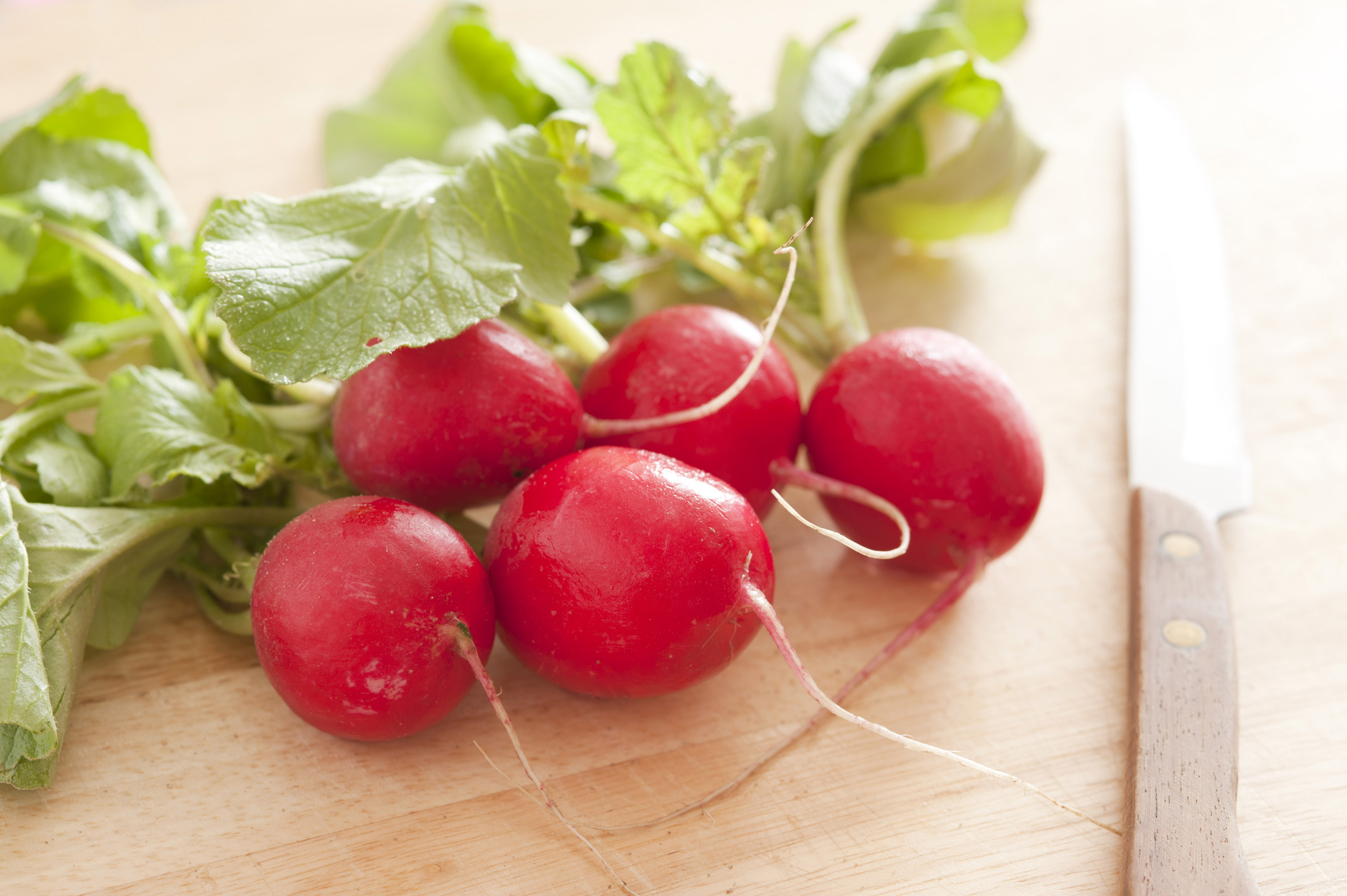 Bunch of fresh crispy red radishes with leaves lying on a kitchen table alongside a knife