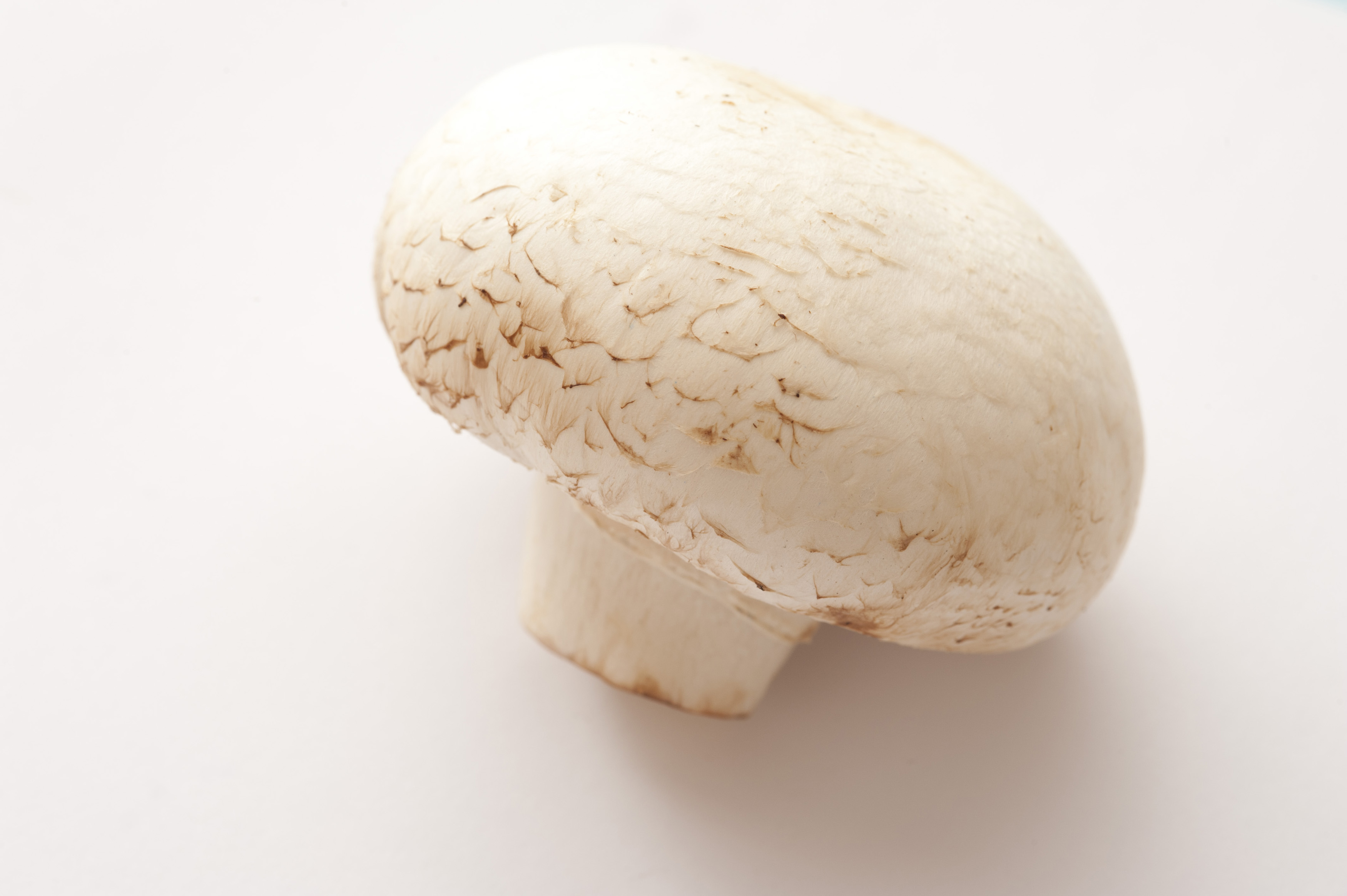 Single fresh whole agaricus bisporus mushroom, or white button mushroom, the most commonly cultivated fungi for use in cooking, over white