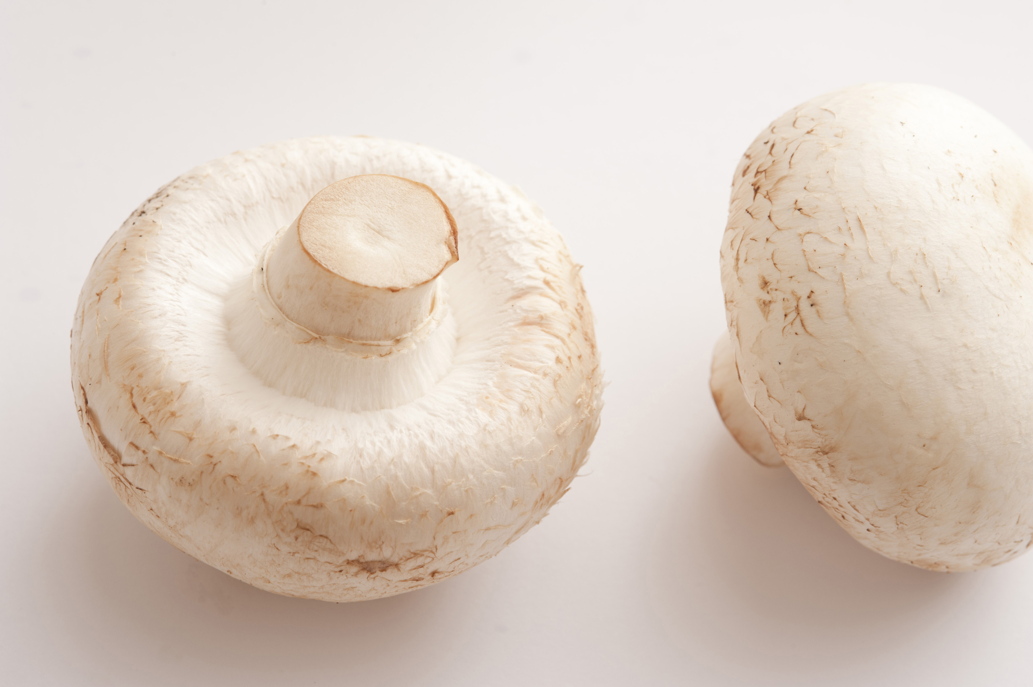 Close-up of two isolated white mushrooms on white background