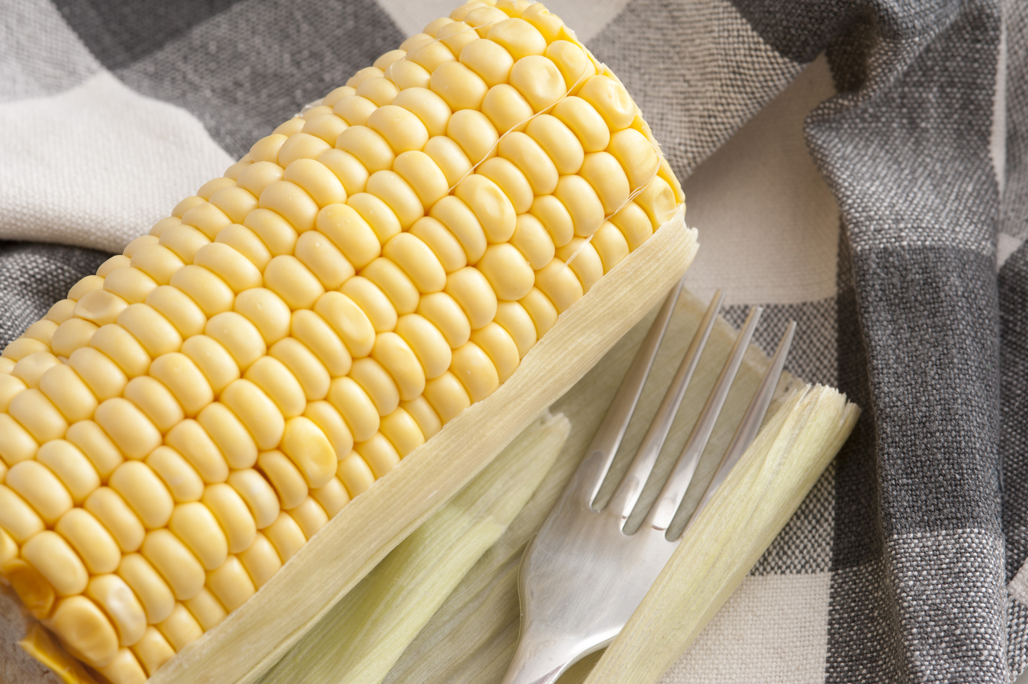 Uncooked sweet corn on the cob cut through at either end waiting to be boiled or grilled for a tasty snack or accompaniment to a meal