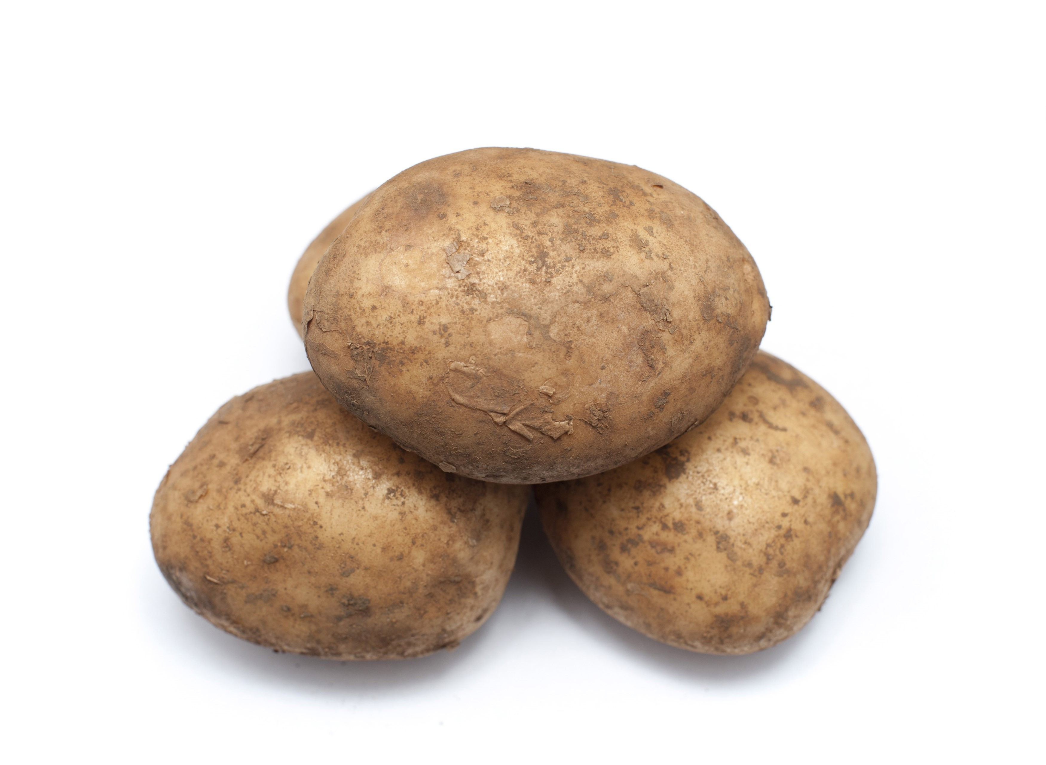 Three farm fresh unwashed potatoes, an important agricultural crop and ingredient in cooking